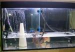 Простое крепление для разделительных стекол в аквариуме